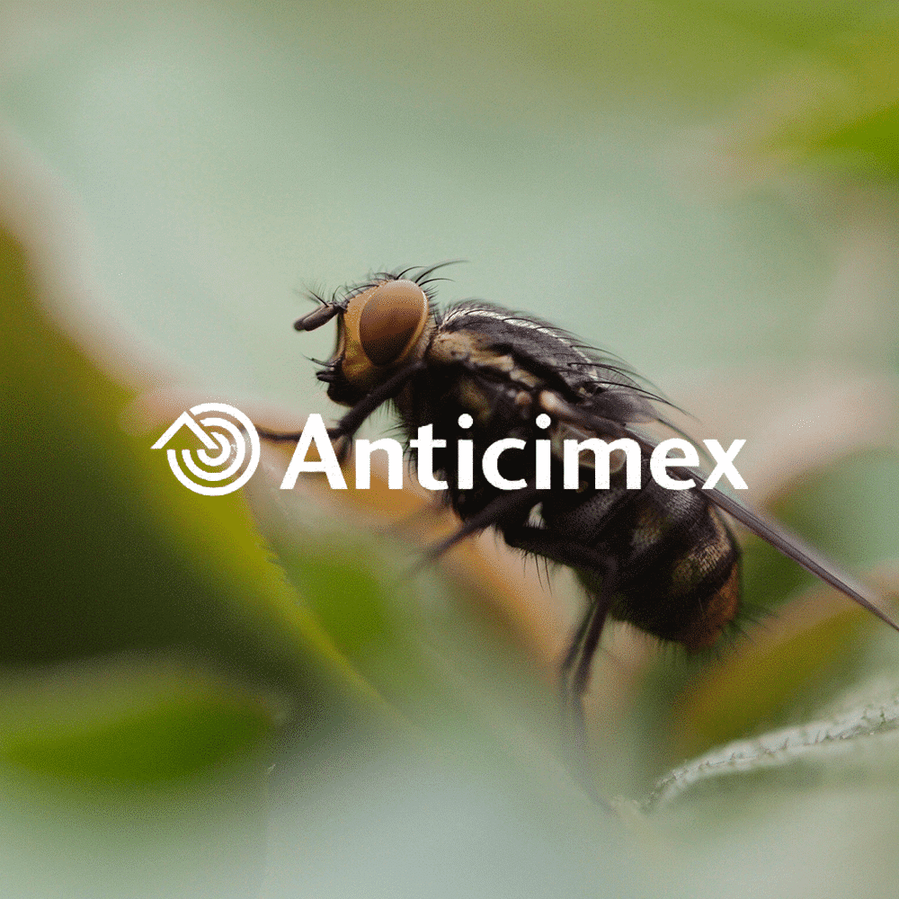Anticimex – Hacking Growth: Results within weeks